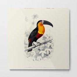 Vintage Toucan Metal Print