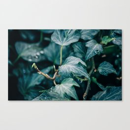 new growth [one] Canvas Print