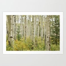 white bark Art Print