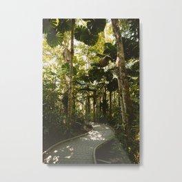Daintree Rainforest III Metal Print