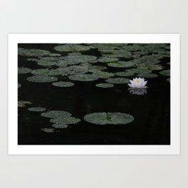 Waterlily Reflection Art Print