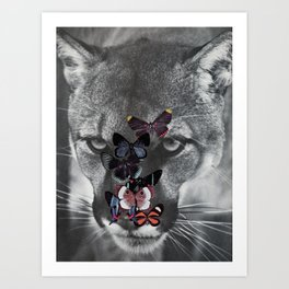 Peaceful Puma Art Print