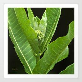 Green Milkweed Abstract Art Print