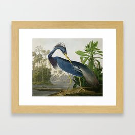 John James Audubon Louisiana Heron Painting Framed Art Print