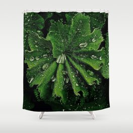 Dew On Rose Scented Geranium Leaves Shower Curtain