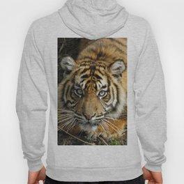 Tiger 2014-0801 Hoody