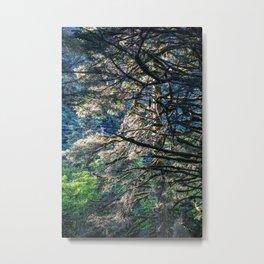 Sunlight Tree Metal Print