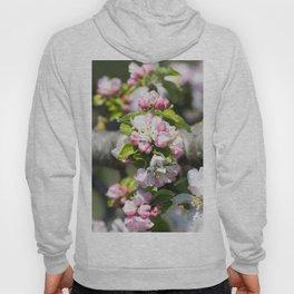 Blooming of the apple tree Hoody