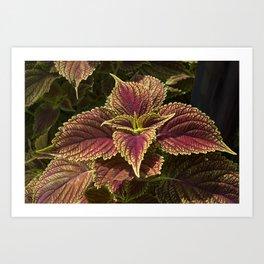 Green Coleus Plant Art Print