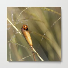Morning Dew On Lady Bird Metal Print