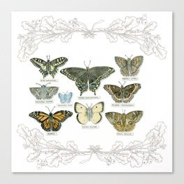 Butterflies and Branches Canvas Print