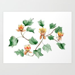 Botanical watercolor illustration of a Tulip tree. Art Print