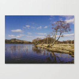 tree on the shore. ullswater, lake district, uk Canvas Print