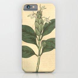 Flower 1847 justicia ecbolium Long spiked Justicia10 iPhone Case