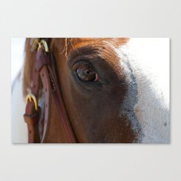 The Eye and the Horse Canvas Print