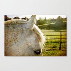 White Whisper Canvas Print