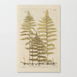 Vintage Fern Botanical Canvas Print