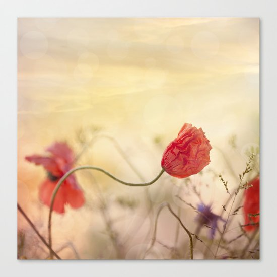 Poppy flower and sunset Canvas Print