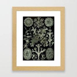 Naturalist Lichen Framed Art Print