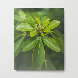 Young Leaves Metal Print