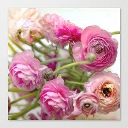 Pink Ranucula Canvas Print