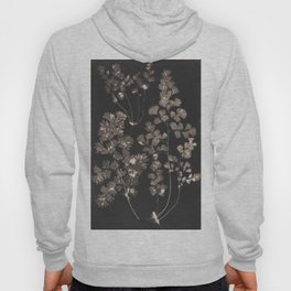 Black Maidenhair Hoody