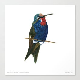 Blue-tufted Starthroat Canvas Print