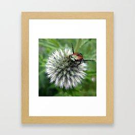 Beatle  Framed Art Print