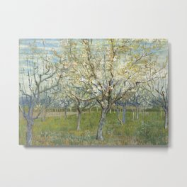 Orchard with Blooming Apricot Trees Metal Print