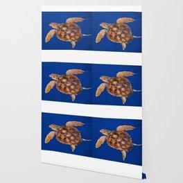 Loggerhead turtle Wallpaper