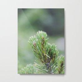 Evergreen Needles Metal Print