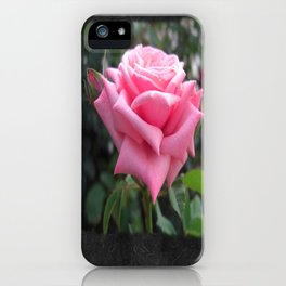 Pink Roses in Anzures 6 Blank P4F0 iPhone Case