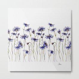 Blue Cornflowers, Illustration Metal Print