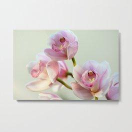 Cymbidium orchid 9770 Metal Print