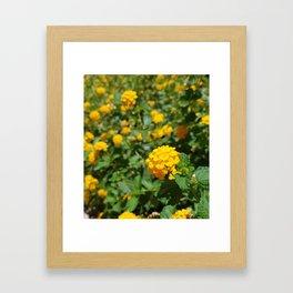 Yellow Chrysanthemum in Focus Framed Art Print
