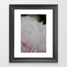 Peony Flower - Ottawa ON Framed Art Print