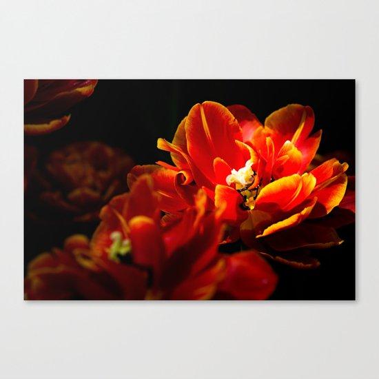 Red tulips dark background Canvas Print