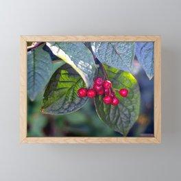 Poison or not : Red berries Framed Mini Art Print