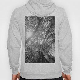 Banyan Tree Hoody