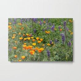 California Poppies & Lupines Metal Print
