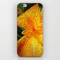 'TIGER TIGER' iPhone & iPod Skin