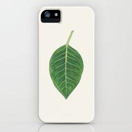 Ficus benghalensis iPhone Case