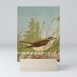 Vintage Print - Water-Thrush Mini Art Print