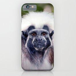 Cotton-top Marmoset iPhone Case