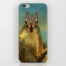 Little Red Squirrel iPhone & iPod Skin