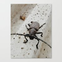 beetle Canvas Prints featuring Beetle by Bor Cvetko