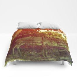 Egyptian Donkey Comforters