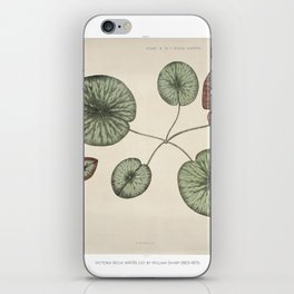 Vintage front piece of a young gigantic water lily (Victoria Regia) iPhone Skin