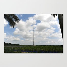Wires and plants. Canvas Print