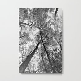 Looking Up in Black and White Metal Print